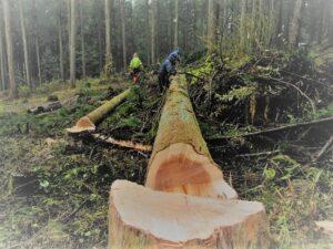 伐採ツアー